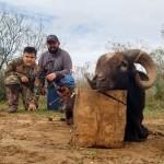 black hawaiian ram hunt in texas