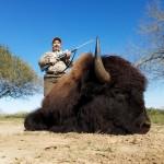 Trophy Bison buffalo bull hunt