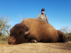 trophy american bison buffalo hunt in texas