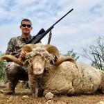 Merino Ram Hunt in texas