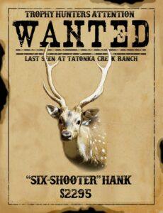 trophy axis hunt in texas