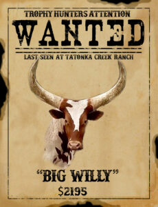 trophy watusi hunt in texas