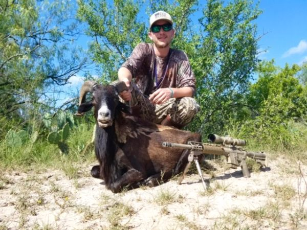 South Texas Ram Hunts