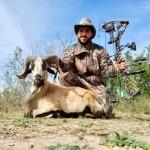 Corsican Ram hunt