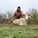 Four Horn Ram hunt