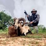 Trophy Corsican Ram hunt