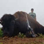 Trophy Bison Hunt in Texas