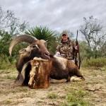 trophy mouflon ram hunt