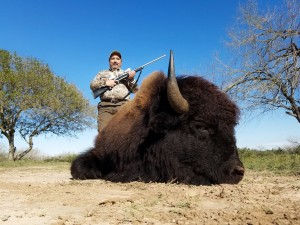 Trophy Bison buffalo bull hunt