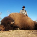trophy american bison buffalo hunt in texas
