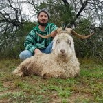 trophy new zealand mountain goat hunt in texas