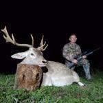 trophy fallow buck hunt in texas