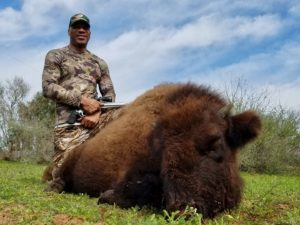 bison meat hunt in texas