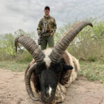 trophy four horn ram hunt in texas
