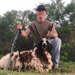 trophy four horn ram hunt in texas