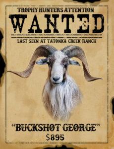 trophy painted desert ram hunt in texas