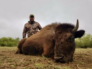 meat bison hunt in texas